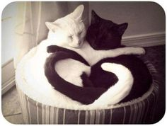 I used to have a 2 cats Cole (black) & Elmer (White) and they loved each other like this...Sweet Picture....see the heart?