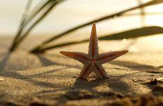 Starfish Still life on the beach byTanja Riedelon 500px