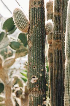 52 Best G Images Succulents Botany Cacti Succulents