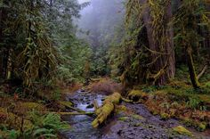 Deep Forest by RCPage