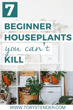 7 Beginner Houseplants You Can't Kill / Easy houseplants low light / Houseplants no light / 10 plants for a beginner / Beginner's Guide to indoor Houseplants / Easy to care for indoor plants / indoor plants easy / Houseplants when you have a black thumb   #Houseplants #BeginnerHouseplants #Beginner #HOuseplants Indoor Plants Low Light, Plants Indoor, House Plants Decor, Plant Decor, Common House Plants, Air Cleaning Plants, Types Of Succulents, Jade Plants, House Plant Care