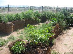 Straw Bale Gardening on Arizona clay - Photo blog ~ Homesteader's SupplyHome
