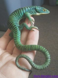 Reptiles are nice dragon frogs geckos cage enclosure frogs Reptiles Et Amphibiens, Cute Reptiles, Mammals, Reptiles Facts, Animals And Pets, Funny Animals, Cute Animals, Beautiful Creatures, Animals Beautiful