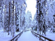 Globetrotter: Ranua Zoo, an Arctic Zoo of the #Lapland (Part 1) #Finland