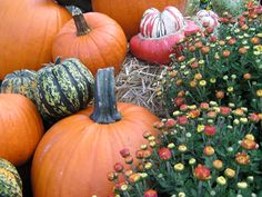 Pumpkins, gourds & mums - true signs that fall has arrived. Perfect for dressing up an entryway, patio or porch; it's time to decorate for fall!