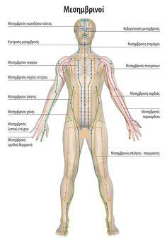 Holistic Medicine, Massage Techniques, Body Treatments, Digital Nomad, Anatomy, Kai, Health Fitness, Yoga, Channel