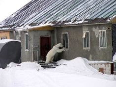 demotivational posters, polar bear - Dump A Day Links Of London, Irregular Choice, Animal Pictures, Funny Pictures, Random Pictures, Funny Animals, Cute Animals, Animal Fun, Wild Animals