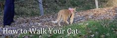 How to Walk Your Cat- An Easy Three Step Guide (Great training tips!)