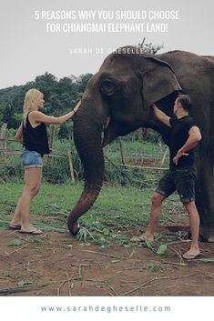 Looking for an elephant sanctuary near Chiang Mai, Thailand? In this blogpost i give 5 good reasons for choosing Chiangmai elephantland