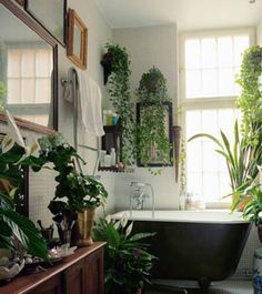 dream bathroom. hanging houseplants: ivy + cordatum + fiddle leaf fig plant + ficus