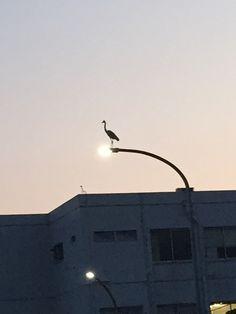 Birds perching on streetlights