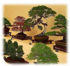 Bonsai - A great site with lots of details about cutting, traditional forms, and beginner plants. Bonsaiexperience.com