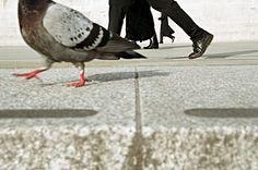 Matt Stuart | Trafalgar Square | 2006
