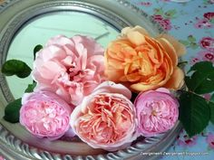 roses in a mirror