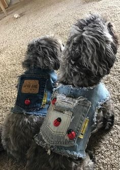 Denim Dog Harness Vest Ladybugs Teacup Dog Small Dog