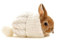 Bunny in a winter hat