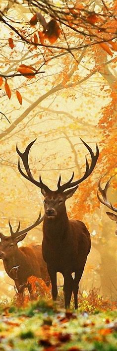 Would LOVE to see couple of deer show up like that this deer season!!