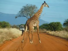 5 Tage Tsavo Ost und West, den Amboseli und Ziwani - Safaris in Kenia - Kenia…