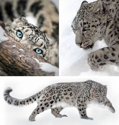 """25 """"Big Cat"""" Pictures As Captured By A Cat Whisperer"""
