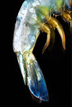 Aaron Graubart - Shrimp colors