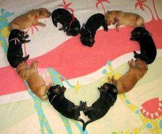 2.14.14 - Valentine Dogs14