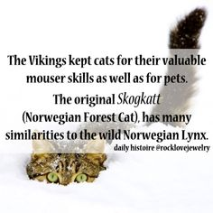 Daily Histoire (Viking, Norse , Norwegian Forest Cat, Skogkatt)