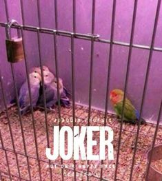 Batman Joker Wallpaper, Joker Wallpapers, Joker Frases, Joker Quotes, Joker Meme, Stranger Things, Disney Tapete, Joker Phoenix, Dc Comics