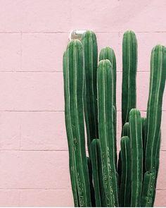 #PlantsOnPink by @dabito