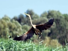 20645183_1465610563527506_1823085601145225241_o Danube Delta, Boat Tours, Bird Watching, Bald Eagle