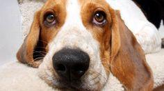 dog pose: nose angle