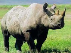 Stick my hand in a rhino's mouth while feeding it!