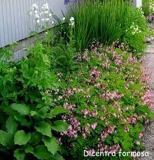 kesäpikkusydän Plants, Plant, Planting, Planets