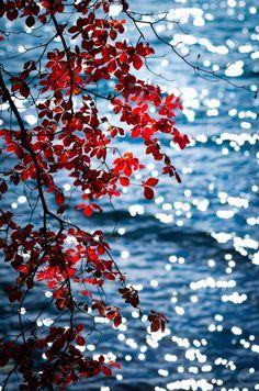 http://dezinosent.tumblr.com/ Twinkling Autumn ( by C. Padilla )