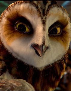 Amazing owl face close-up.