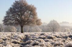 Scenes of winter wonderland in Richmond Park
