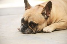 Housebreak Your Dog: Make Your Life Easier With Dog Training to Potty Train Your Pet: Tips That Work Training Collar, Dog Training, Dressage, Dry Nose, French Dogs, Pet Shampoo, Losing A Dog, Nottingham, Pet Portraits