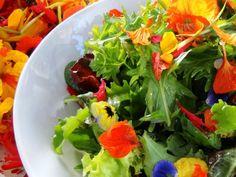 fleurs comestibles alsagarden
