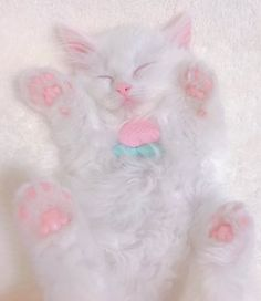 Kittens Cutest, Cats And Kittens, Cute Cats, Cat Icon, Kawaii, Cat Aesthetic, Cute Little Animals, Cat Paws, Pretty Cats