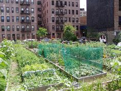 Google Image Result for http://visualizenashua.com/wp-content/uploads/2011/06/urban-community-garden.jpg
