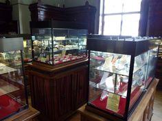 Museo Histórico-Minero - Sala dedicada a los osos pardos ibéricos.