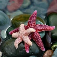 ...beautiful Starfish...