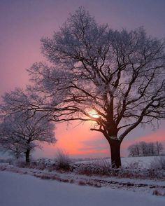 Winter sunset [photographer and location unknown] Winter Sunset, Winter Scenery, Winter Trees, Winter Snow, Winter Pictures, Nature Pictures, Winter Landscape, Landscape Photos, Winter Photography