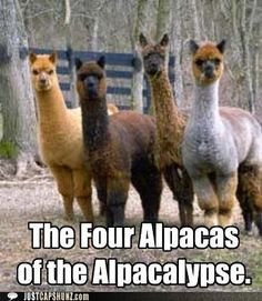 Love alpacas.