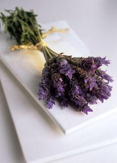 Google Image Result for http://everything-lavender.com/bravenet-images/FLOWEREMIMRF-00002957-001.jpg