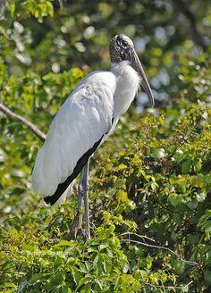 Stork Bird, Little Birdie, Nature View, Sea Birds, Bird Feathers, View Photos, Wood, Animals, Animales