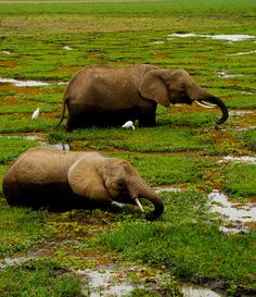 Amboseli National Park, Kenya    (Source: tumblingtwats)