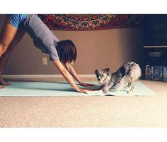 Os Vídeos Mais Fofinhos de Animais Que Interromperam a Sessão de #Yoga http://wnli.st/1Kf65gT