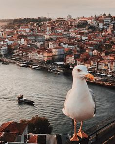 Porto: City Guide of Must See Spot Around The World In 80 Days, Travel Around The World, Around The Worlds, Draw On Photos, Cool Photos, Porto City, Portuguese Culture, Douro, Beautiful Buildings