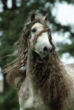 curly mane?