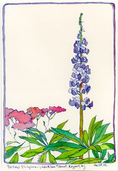 Color Studies | ChrisCarter-Artist - Yarrow and Lupine, Ink and Watercolor